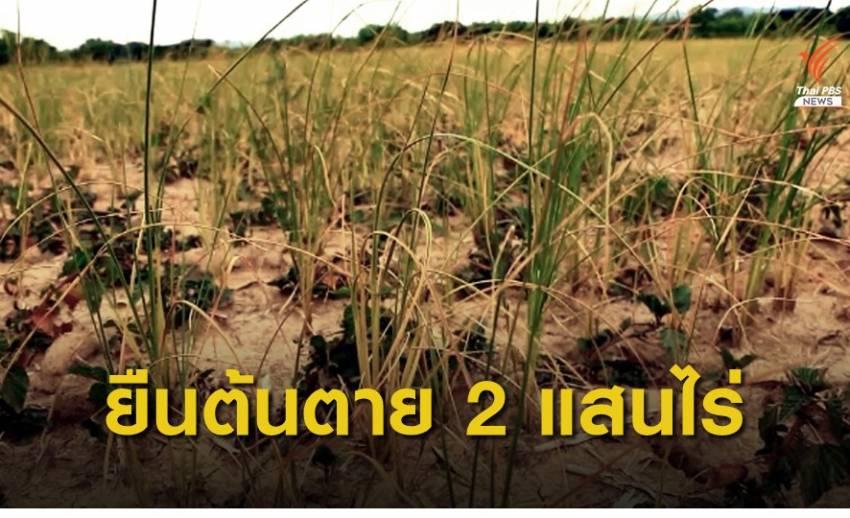 ภัยแล้งกระทบพื้นที่การเกษตรเสียหายแล้วกว่า 2 แสนไร่