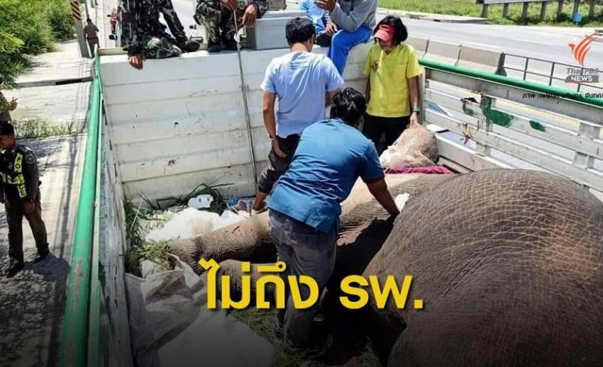 ตายแล้ว! ช้างป่าเขาอ่างฤาไนถูกรถ 18 ล้อชนเจ็บสาหัส