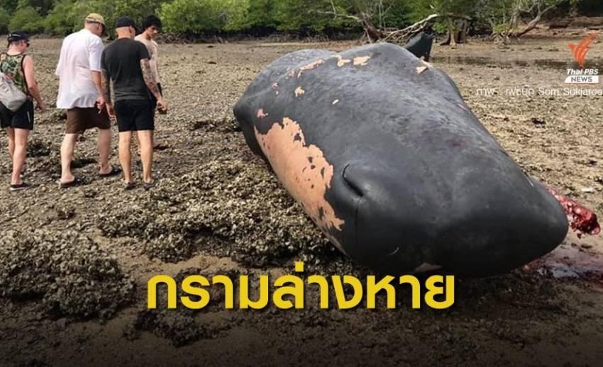 """สูญเสีย """"วาฬหัวทุย"""" สัตว์คุ้มครองเกยตื้นตายอีก 1 ตัวถูกตัดกราม"""