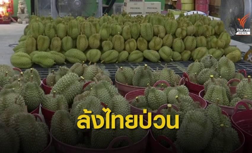 จีนเข้มนำเข้าผลไม้ต้องขึ้นทะเบียน GMP ป่วนตลาดทุเรียนไทย