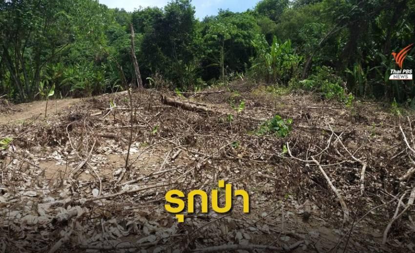 ร้องหน่วยงานรัฐรุกป่าสงวน 221 ไร่ อ.หลังสวน จ.ชุมพร