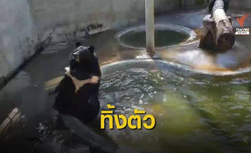น่ารัก! น้องเจมส์ หมีกำพร้าโชว์ตีลังกาลงน้ำ