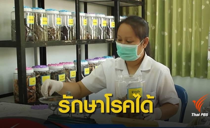 """เริ่มใช้! ใบอนุญาต """"หมอพื้นบ้าน"""" รักษาโรคภูมิปัญญาแพทย์แผนไทย"""
