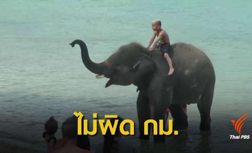 ปางช้างรอด ! ไม่เจอปะการังพัง คลิปทัวร์พาช้างเล่นน้ำทะเลภูเก็ต