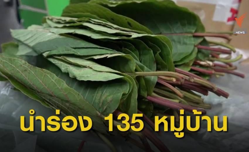 นำร่อง 135 หมู่บ้าน เสพพืชกระท่อมไม่ผิดกฎหมาย
