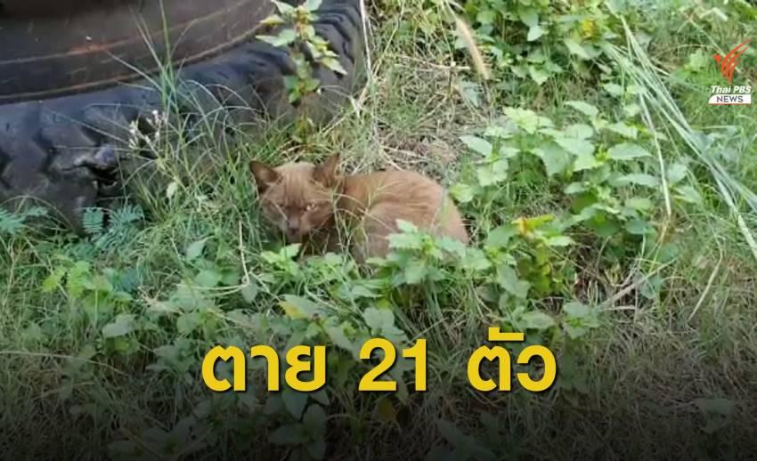 """สัตวแพทย์ตรวจแมวตายเกือบหมดหมู่บ้าน พบ """"ไข้หวัดแมว"""" ระบาด"""