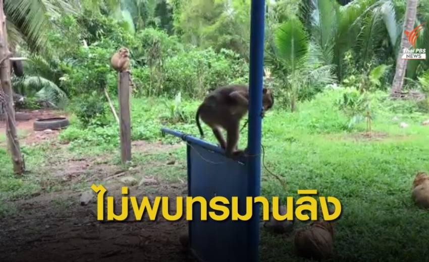 ผู้ว่าฯ สุราษฎร์ธานี เผยไม่พบการทรมานลิงเก็บมะพร้าว