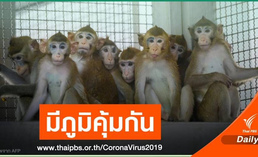 ความหวังใหม่! นักวิจัยไทยทดสอบวัคซีน COVID-19 ในลิงฉลุย