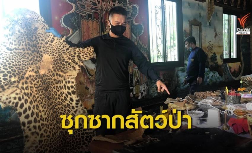 พญาเสือค้นอาศรม รวบพ่อค้าขายวัตถุมงคล-ซากสัตว์ป่าอื้อ
