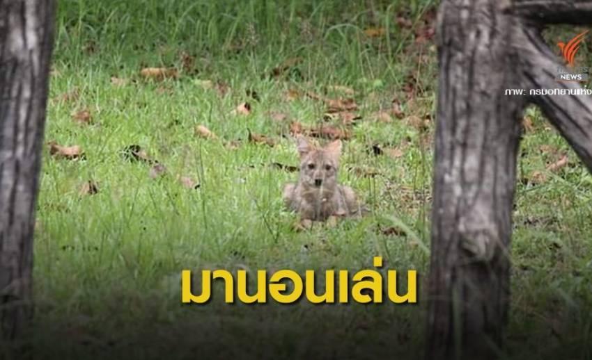 """สัตว์ป่าโชว์ตัวถี่ """"วราวุธ"""" เล็งปิดอุทยานทุกแห่งปีละ 3 เดือน"""