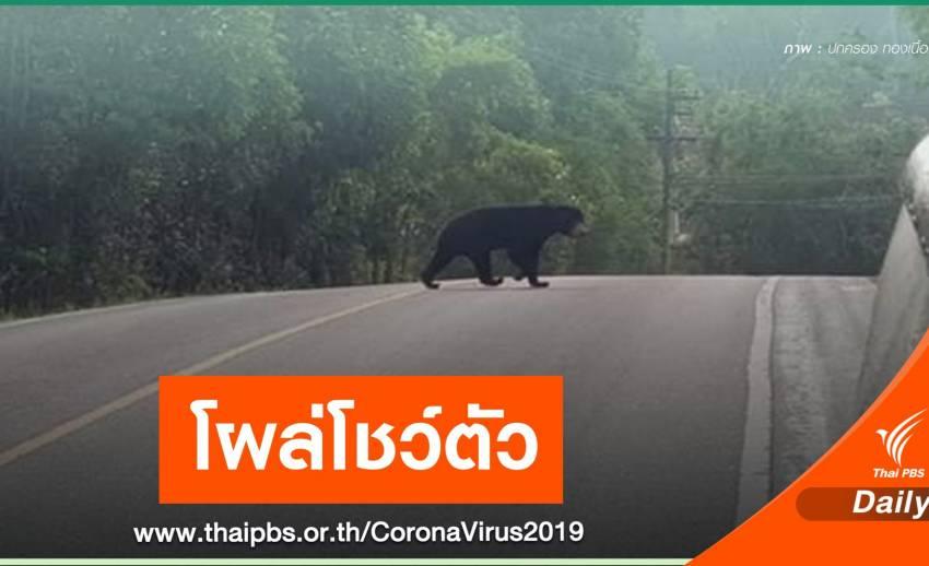 """""""หมีหมา"""" โชว์ตัวเขาใหญ่ หลังปิดรับนักท่องเที่ยวช่วง COVID-19"""