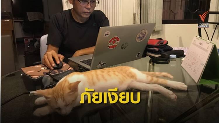 """ทาสแมวต้องระวัง """"โรคขี้แมวขึ้นสมอง"""" แต่มีอาการทางตา"""