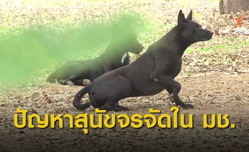 ปัญหาสุนัขจรจัดกว่า 200 ตัว ใน มช.