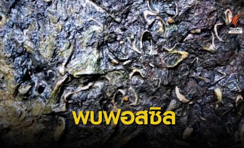 พบฟอสซิลหอยน้ำเค็ม อายุ 270-290 ล้านปี