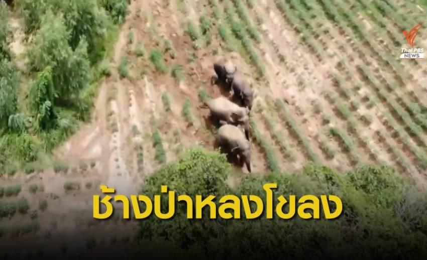 พบช้างป่าเขาอ่างฤาไนอีก 4 ตัวที่ จ.ปราจีนบุรี