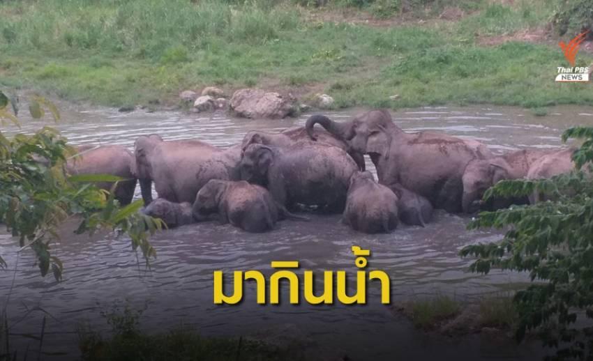 ช้างป่าแก่งกระจาน พาสมาชิกแรกเกิด 3 ตัว มากินน้ำสระเขาหุบเต่า
