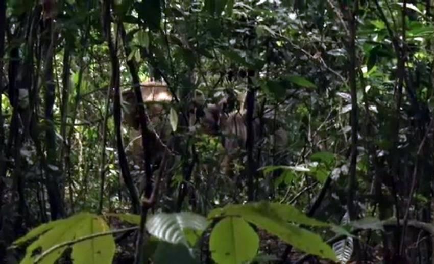 """ร่วมรักษาผืนป่าเทือกเขาหลวงให้""""ช้าง""""ได้พักพิงอาศัย"""