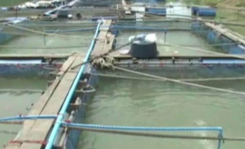 ผู้เลี้ยงปลากระชัง จ.อ่างทอง เร่งติดเครื่องเพิ่มออกซิเจน ป้องกันปลาตาย หลังเจอภัยแล้ง