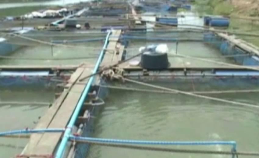 แม่น้ำเจ้าพระยาลด กระทบผู้เลี้ยงปลากระชังในอ่างทอง เร่งติดตั้งเครื่องเพิ่มออกซิเจน