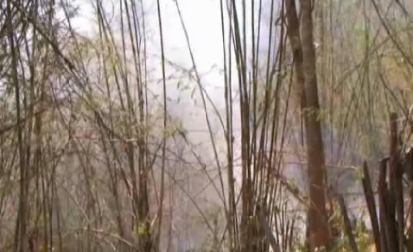 เกิดไฟป่าสวนผึ้ง จ.ราชบุรี เสียหายกว่า10,000 ไร่