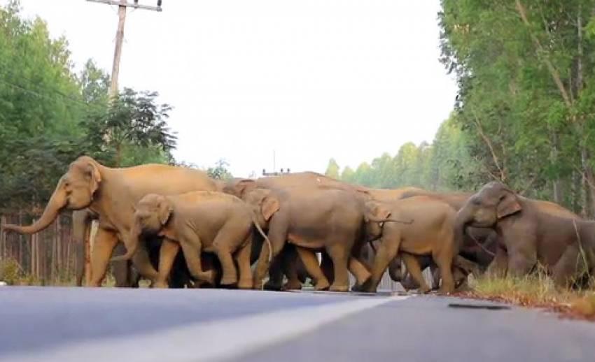 5 จังหวัด ร่วมแก้ปัญหาช้างป่ากัดกินพืชไร่ชาวบ้าน