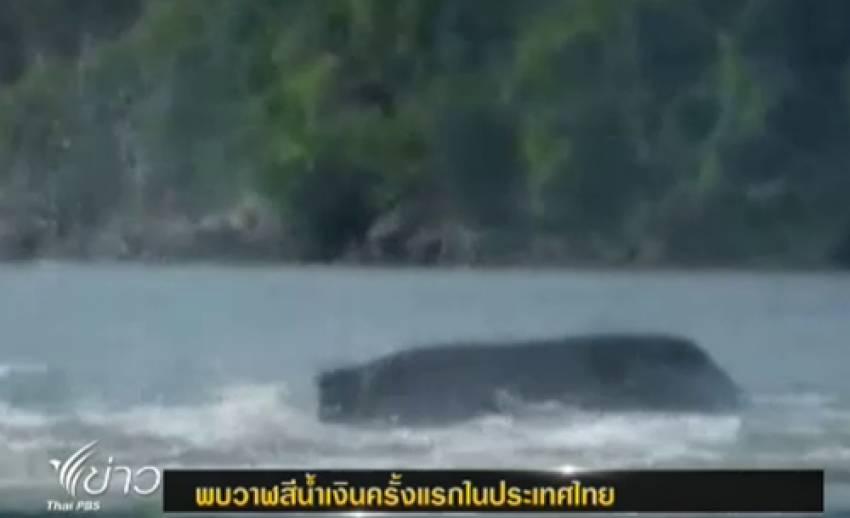"""พบ""""วาฬสีน้ำเงิน""""มีน้ำหนักกว่า 100 ตัน ครั้งแรกในประเทศไทย"""