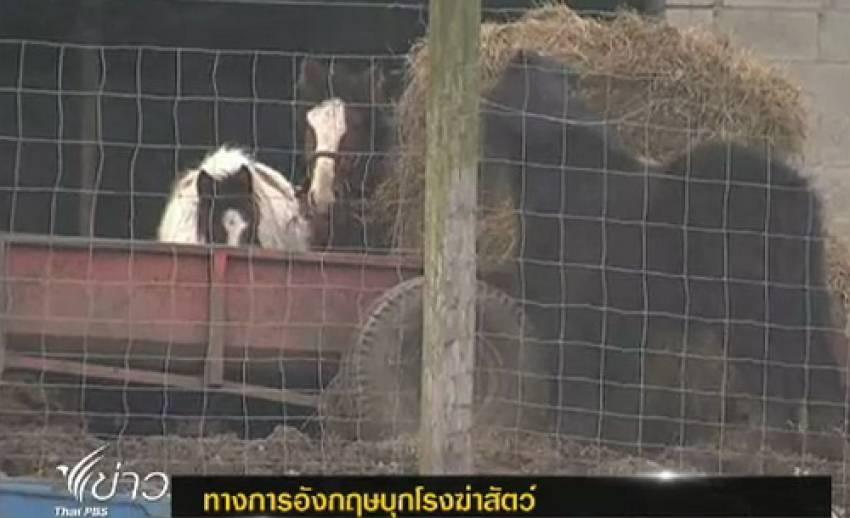 ทางการอังกฤษบุกโรงฆ่าสัตว์