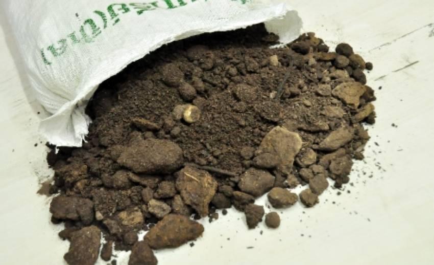 """""""ขี้เล"""" ปุ๋ยอินทรีย์จากดินเลน ช่วยพืชผลโตไว  ลดต้นทุน"""