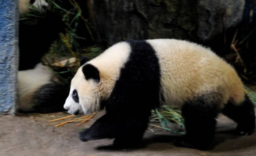"""""""หลินปิง""""ร่างกายสมบูรณ์พร้อมกลับจีนเพื่อหาคู่"""