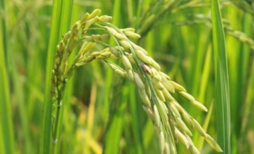 """กองทุน""""เอฟทีเอ"""" เสริมจุดเด่นเกษตรกรไทย พัฒนา""""สมาร์ทฟาร์มเมอร์"""""""
