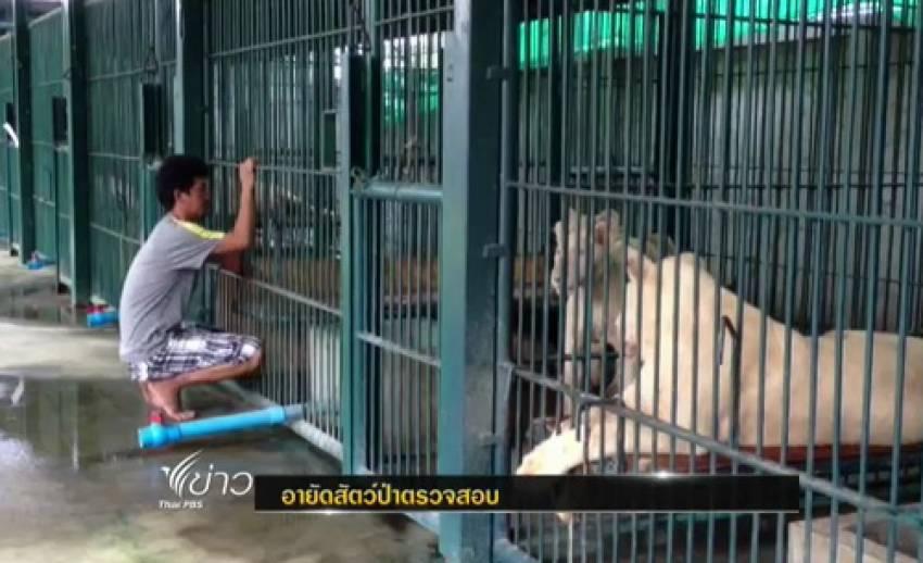 ตำรวจอายัดสิงโต-สัตว์ป่าจำนวนมาก ในบ้านย่านคลองสามวา