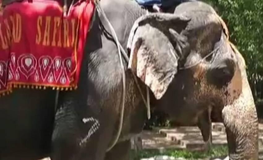 ตร.สั่งอายัดช้าง 70 เชือกในปางช้าง จ.พังงา