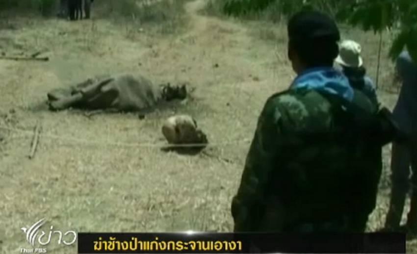 จนท.พบซากช้างป่าแก่งกระจาน คาดถูกฆ่าเอางา