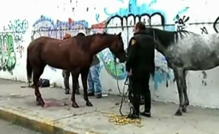 ม้าวิ่งเตลิดกลางถนนหลวงในเม็กซิโก