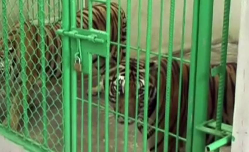ตำรวจมุกดาหารพบสัตว์ป่าจำนวนมากในอาคารต้องสงสัย