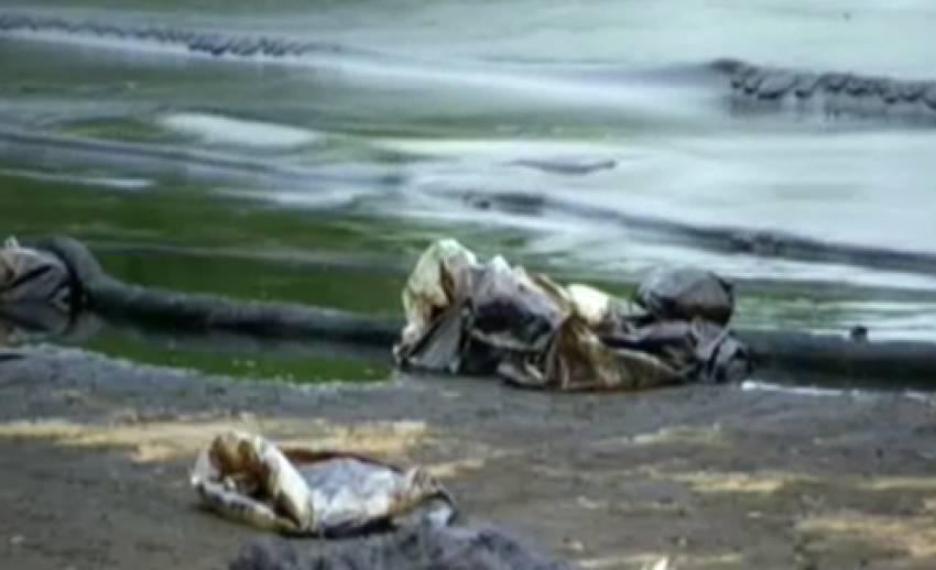 นักชีววิทยา หวั่นสารเคมีตกค้าง หลังขจัดคราบน้ำมันในทะเล