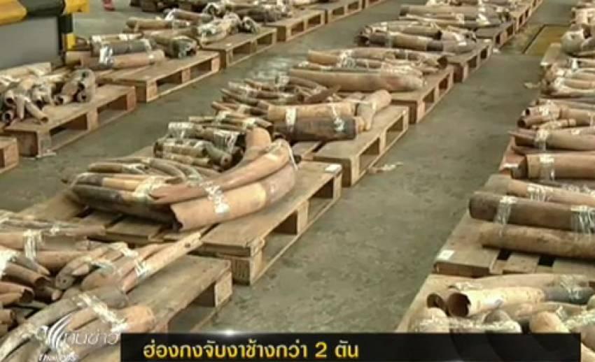 ศุลกากรฮ่องกงจับงาช้างกว่า 2 ตัน