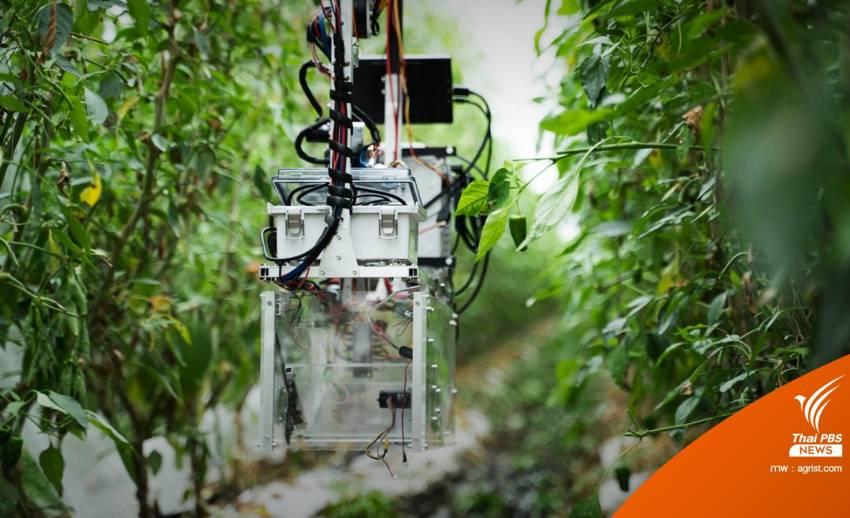สตาร์ตอัปญี่ปุ่นพัฒนาหุ่นยนต์เก็บพริกหยวก ลดปัญหาขาดแรงงาน