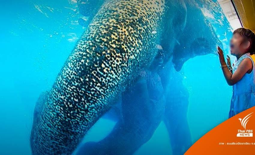 """ไม่ยุติโชว์ """"ช้างว่ายน้ำ"""" หลังดราม่า Elephant in the Room"""