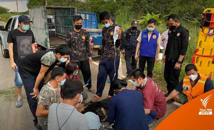 ล้อมจับหมีตาฟาง พลัดหลงจากป่าเข้ามาในชุมชน หวั่นถูกทำร้าย