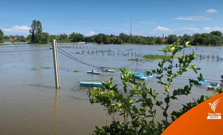 น้ำท่วม จ.สุพรรณบุรี กว่า 1 สัปดาห์ กระทบผู้เลี้ยงกุ้ง