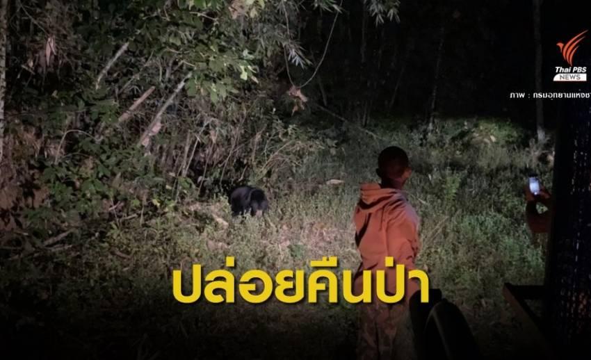 """ปล่อย """"เจ้าขนุน"""" หมีหมาคืนป่าแก่งกระจาน"""