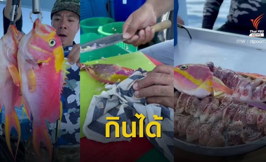 """""""กรมประมง"""" เฉลยแล้ว """"ปลาพิ้งกี้"""" กินได้แต่ไม่นิยมในไทย"""