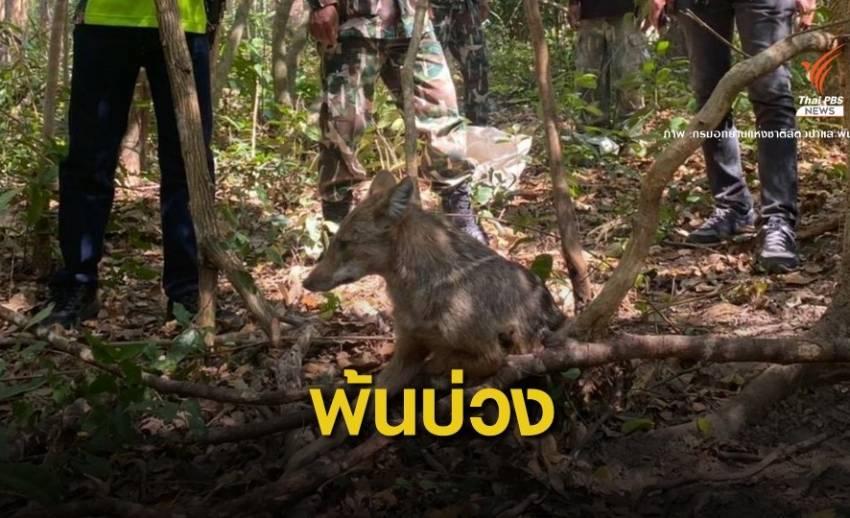 รอดตาย! จนท.พิทักษ์ป่าช่วย 2 หมาจิ้งจอกพ้นบ่วงดักสัตว์