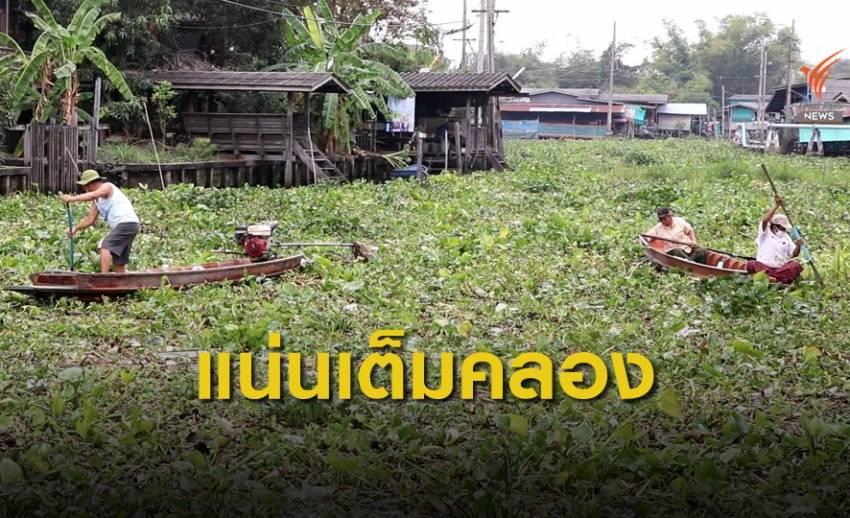 ผักตบชวาเต็มลำคลอง กีดขวางการสัญจรทางเรือ จ.นนทบุรี