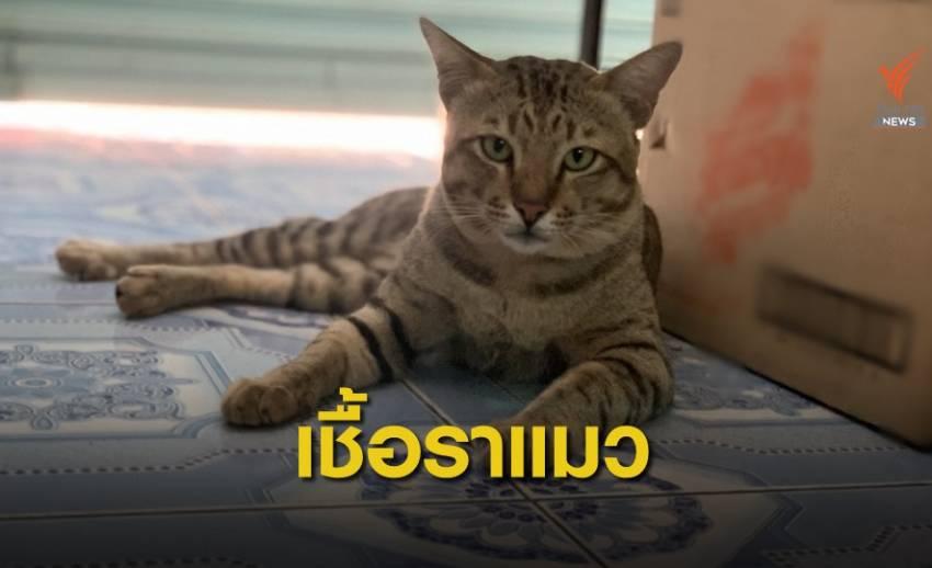 """แพทย์ผิวหนังเตือน """"เชื้อราแมว"""" ติดสู่คนเลี้ยง"""