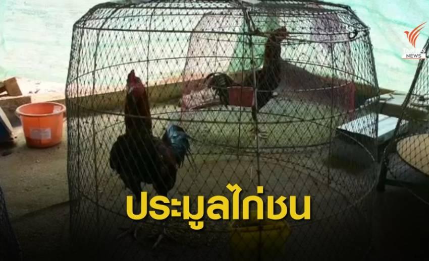 ป.ป.ส.ภาค 5 ขายทอดตลาดไก่ชน กลุ่มค้ายาเสพติด