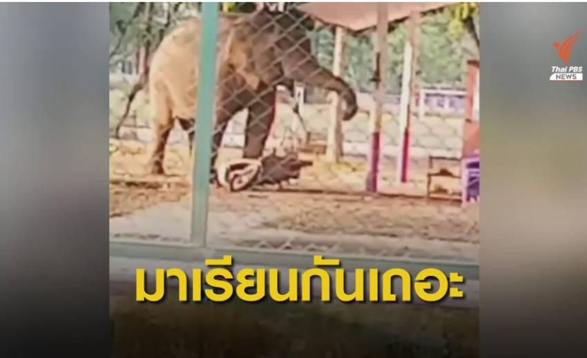 น่ารัก! ช้างป่าสีดอแก้ว บุกเคาะระฆังโรงเรียน ตชด.