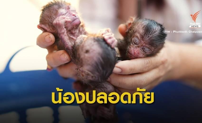หายาก! ลูกลิงแฝด 3 ถูกแม่ทิ้งห้อยกันสาด อาการปลอดภัยแล้ว