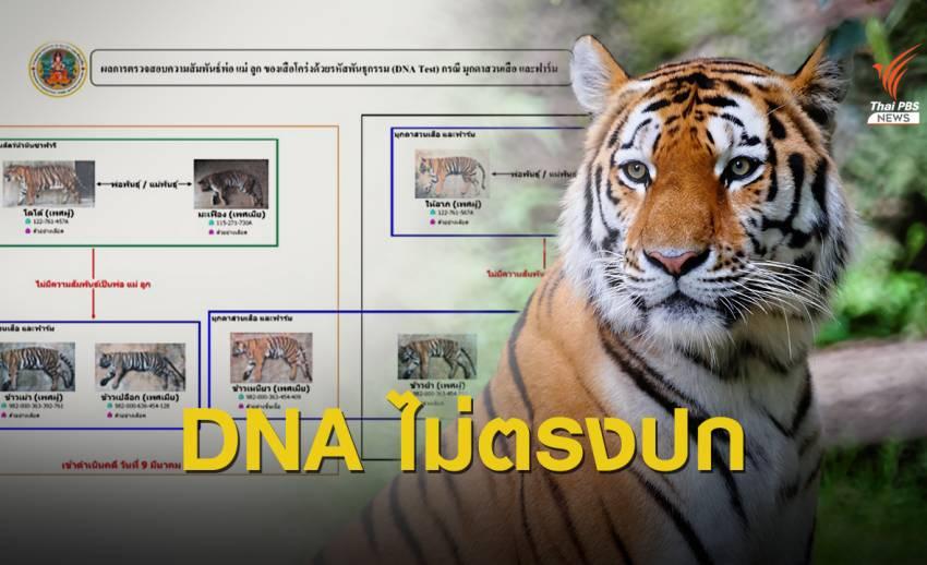 """แจ้งข้อหาเพิ่ม สวนสัตว์ดัง """"3 เสือโคร่ง"""" DNA ไม่ตรงปก"""
